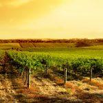 L'IoT e l'Intelligenza Artificiale aiutano l'AgriFood